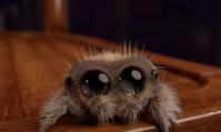 Lucas, la plus mignonne des araignées